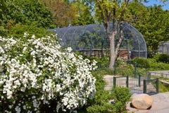 Bloemen in Berlin Zoo Stock Foto's