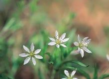 Bloemen bij Aard stock afbeelding