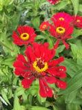 Bloemen bij botanische luis van tuinheilige Royalty-vrije Stock Fotografie