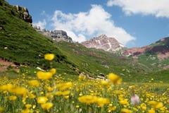 Bloemen bij de heuvel van een berg in de Pyreneeën stock afbeelding