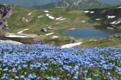 Bloemen bij de heuvel van een berg in de Pyreneeën royalty-vrije stock foto