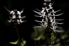 Bloemen bij de Tropische Botanische Tuin van Hawaï, grote eilanden stock fotografie