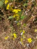 Bloemen bij de Tuin van Mahabaleshwar Mapro stock foto's