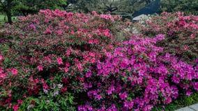 Bloemen bij de tuinen royalty-vrije stock afbeelding