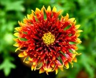 Bloemen bij een botanische tuin Stock Afbeelding