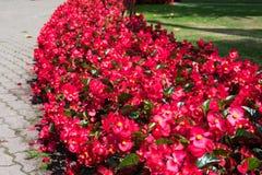 Bloemen bij het Bastejkalns-Park Stock Foto's