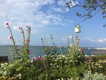 Bloemen bij het Meer Stock Fotografie