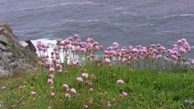 Bloemen bij het Overzees stock footage