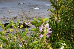 Bloemen bij het Park van de Staat van Lobos van het Punt Royalty-vrije Stock Afbeeldingen