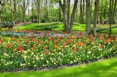 Bloemen bij Keukenhof-tuin, Nederland royalty-vrije stock foto