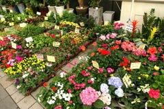 Bloemen bij markt stock fotografie