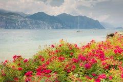 Bloemen bij Meer Garda Stock Foto's
