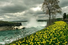 Bloemen bij Niagara-Dalingen, Canada Royalty-vrije Stock Foto's