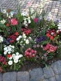 Bloemen bij verschillende kleuren royalty-vrije stock fotografie