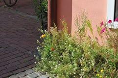 Bloemen bij zonnige voorgevel van een gebouw royalty-vrije stock foto's