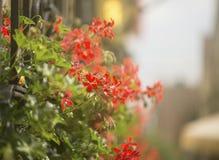 Bloemen bij Zonsondergang Stock Afbeeldingen
