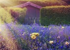 Bloemen bij zonsondergang bij de achtergrondbouw Royalty-vrije Stock Afbeeldingen