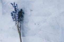 Bloemen in binnenland stock foto