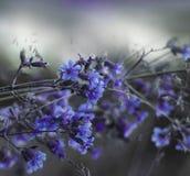 Bloemen blauw-witte mooie achtergrond Bos blauwe bloemen op een vage achtergrond Zachte nadruk Royalty-vrije Stock Afbeelding