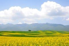 bloemen, blauwe hemel en berg Royalty-vrije Stock Afbeelding