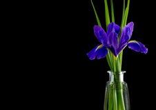 Bloemen blauwe purpere irissen met bladeren, de hoogste mening van de glasvaas Stock Foto's