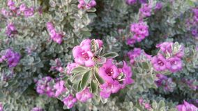 Bloemen in Bloei Royalty-vrije Stock Afbeeldingen