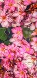Bloemen in Bloei Stock Foto's