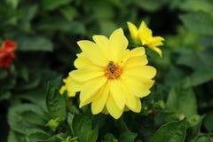 Bloemen in bloembed Royalty-vrije Stock Afbeeldingen