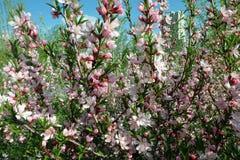 Bloemen in bloesem Royalty-vrije Stock Foto's
