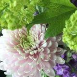 Bloemen boeket Stock Foto