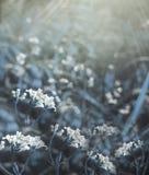 Bloemen bos Bloemen blauwe mooie achtergrond De witte bloemen bloeien in een opheldering in de zonneschijn bij zonsondergang op e Stock Fotografie