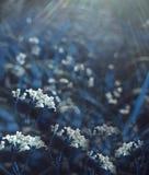 Bloemen bos Bloemen blauwe mooie achtergrond De witte bloemen bloeien in een opheldering in de zonneschijn bij zonsondergang op e Stock Foto