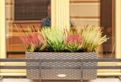 Bloemen buiten Stock Foto