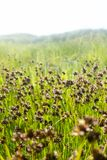 Bloemen in Californië stock foto's