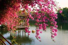 Bloemen in Chinees park. Royalty-vrije Stock Afbeeldingen
