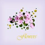 Bloemen in cirkels Stock Fotografie