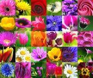 Bloemen collage Stock Afbeeldingen