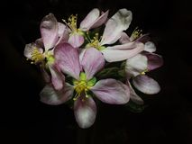 Bloemen in dark Stock Afbeelding