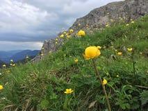 Bloemen in de alpen Royalty-vrije Stock Fotografie