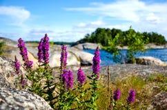 Bloemen in de archipel van Stockholm Stock Foto's