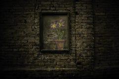 Bloemen in de bakstenen muur stock afbeelding