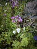 Bloemen in de bergen Stock Fotografie