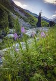 Bloemen in de bergen Stock Foto's