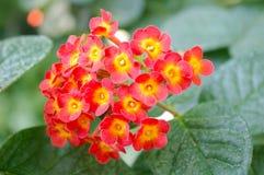 Bloemen in de Botanische Tuin, Boedapest, 2016 Royalty-vrije Stock Fotografie