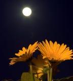 Bloemen in de duisternis Stock Afbeeldingen