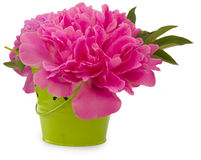 Bloemen in de groene pot Stock Foto's