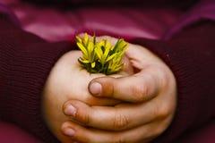 Bloemen in de handen van een kind Royalty-vrije Stock Afbeelding