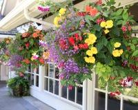Bloemen in de hangende manden met vensters. Royalty-vrije Stock Fotografie