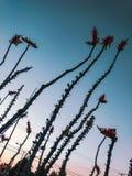Bloemen in de hemel stock afbeeldingen