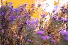 Bloemen in de herfstweide royalty-vrije stock foto